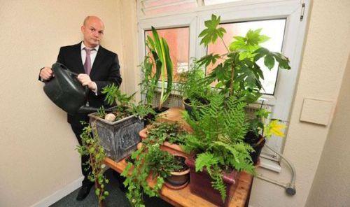 Pot-plants-414630